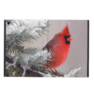 Cardenal septentrional encaramado en un árbol