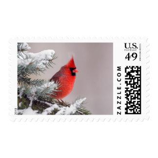 Cardenal septentrional encaramado en un árbol timbres postales