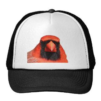 Cardenal septentrional gorra