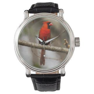 Cardenal septentrional reloj de mano