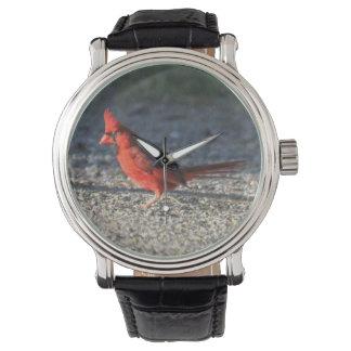 Cardenal septentrional relojes de pulsera