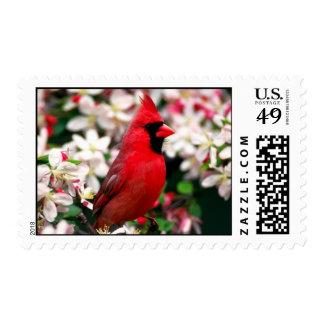 Cardenal septentrional sello postal