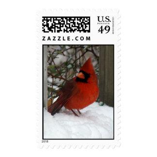 Cardenal y nieve franqueo
