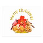 Cardenales del navidad tarjetas postales