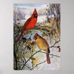 Cardenales en invierno posters