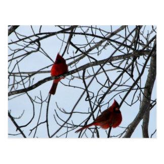 Cardenales en un árbol postales