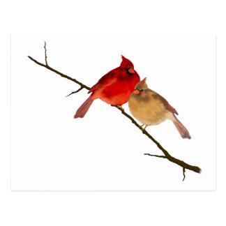 cardenales en una rama tarjetas postales