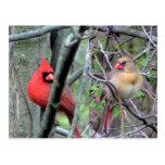 Cardenales (primavera) postal