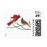 Cardenales rojos festivos sello