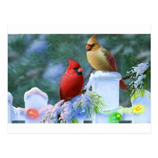Cardenales y luces de navidad tarjeta postal
