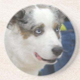 Cardigan Welsh Corgi Dog Coaster