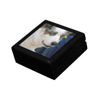 Cardigan Welsh Corgi Dog Gift Box
