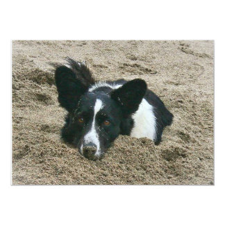 Cardigan Welsh Corgi...find a hole and fill it. Card