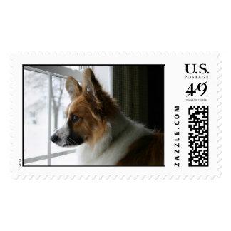 Corgi Dogs Postage Stamps | Zazzle