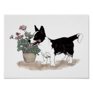 Cardigan Welsh Corgi Print  ~  Tricolor