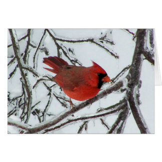 Cardinal Stationery Note Card