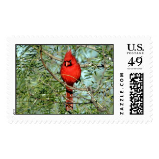 Cardinal - 03 millas sello postal
