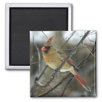 Cardinal 2 Inch Square Magnet