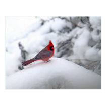 Cardinal 6241 Postcard