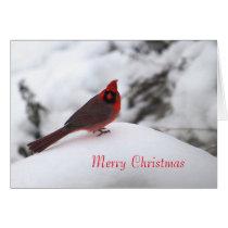 Cardinal 6243 Christmas Card