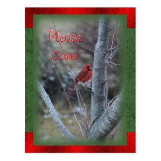Cardinal 7532 Postcard or Invitation- customize