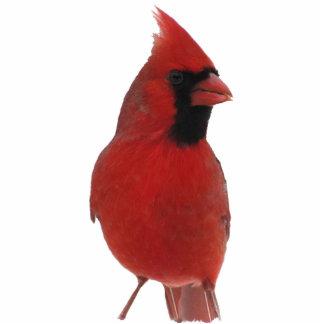 Cardinal Acrylic Keychain Standing Photo Sculpture