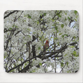 Cardinal Among Bradford Pear Tree Blossoms Mousepad