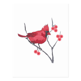 CARDINAL AND BERRIES POST CARD