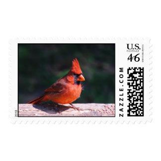 Cardinal at Feeding Time. Stamp