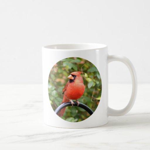 Cardinal Beauty Coffee Mug