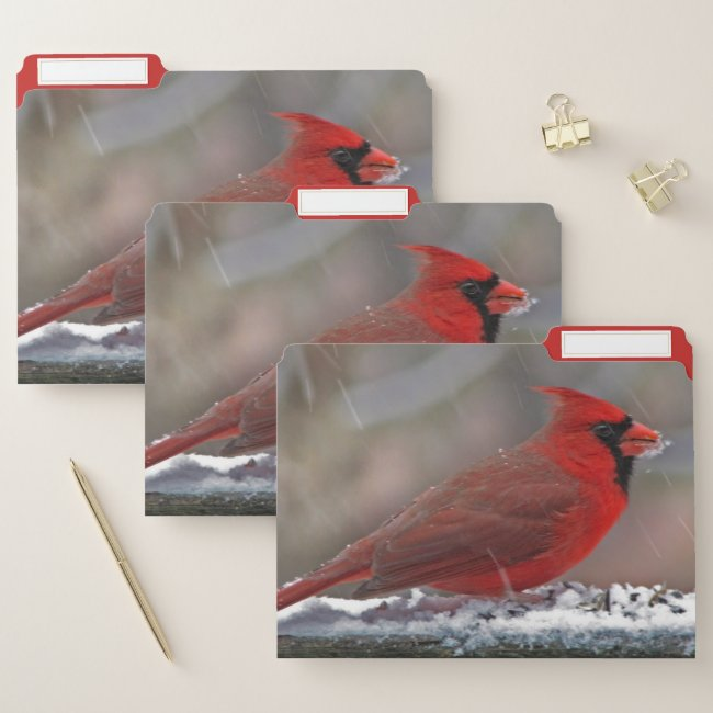 Cardinal Bird in Winter Snow File Folder Set