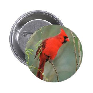 Cardinal Bird Photo Pinback Button