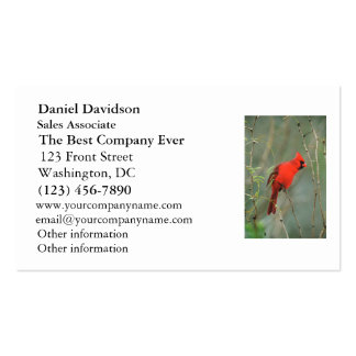 Cardinal Bird Photo Double-Sided Standard Business Cards (Pack Of 100)