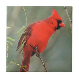 Cardinal Bird Photo Small Square Tile