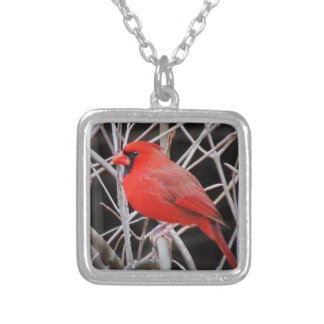 Cardinal - Bird Square Pendant Necklace