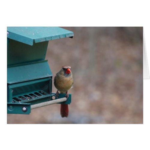 Cardinal Card card