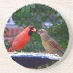 Cardinal Couple Eating Drink Coaster