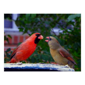 Cardinal Couple Eating Poster
