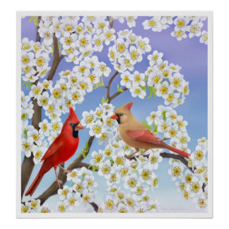 Cardinal Couple in Apple Blossoms Print