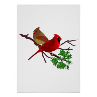 Cardinal Couple on a Branch Poster