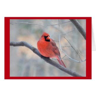 Cardinal Creek Greeting Card