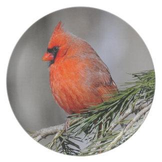 Cardinal Display Plate