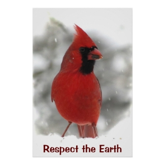 Cardinal Earth Day Poster