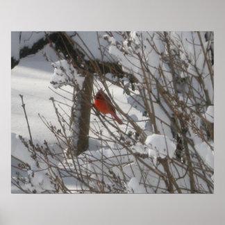 Cardinal Enjoying The Snow Poster
