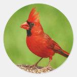 Cardinal Etiquetas Redondas