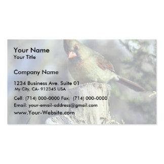 Cardinal-femenino septentrional tarjetas de visita