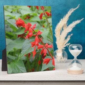 Cardinal Flower Photo Plaque