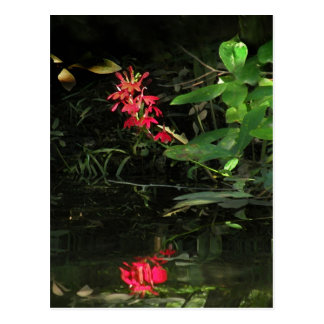 Cardinal Flower Reflection Postcard