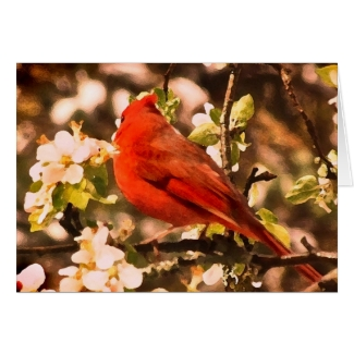 Cardinal for Fathers Day