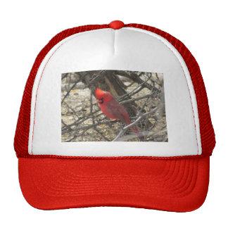 Cardinal Gorro